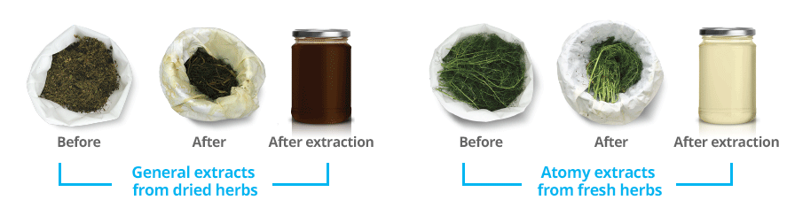 Biotechnologie d'extraction des herbes fraiches